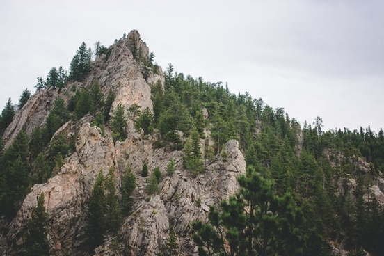 environment forest high hiking landscape mountain
