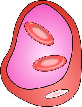 Erythrocyte Red Blood Cell clip art