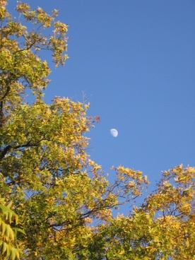 evening autumn moon