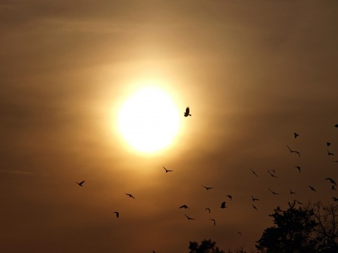 evening sky birds sun
