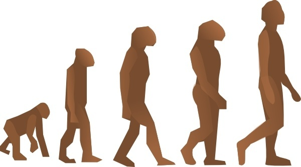 Evolution Steps clip art