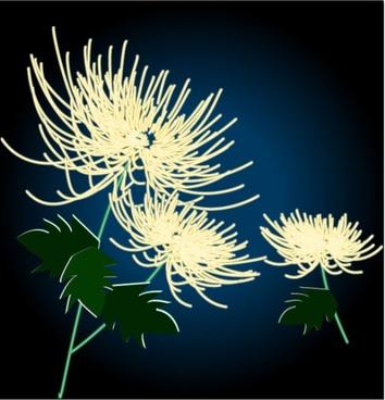exquisite chrysanthemum vector