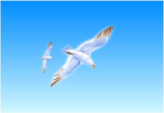 seagull flying drawing colorful design realistic style