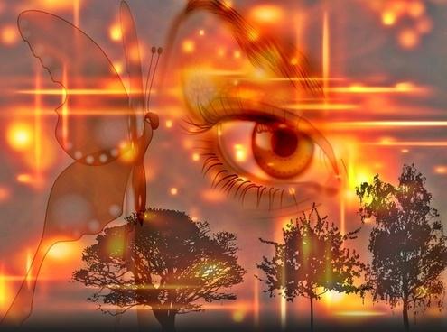 eye butterfly evening