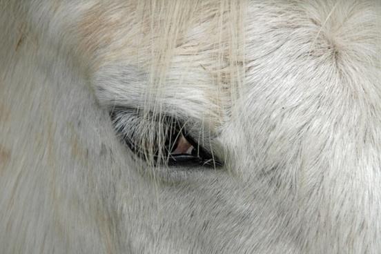 eye horse equestrian