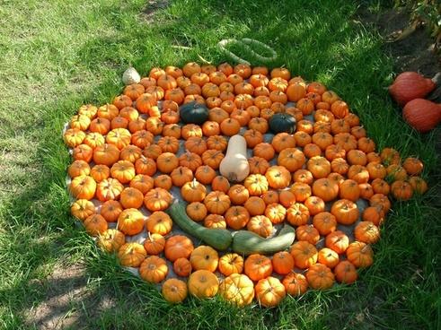 face pumpkin nature