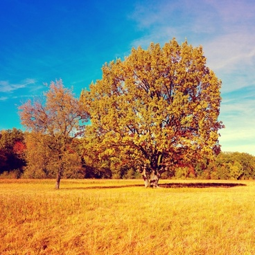 fall autumn tree