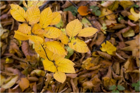 fall fall foliage fall leaves