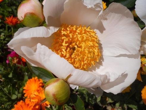 fall flower pollen