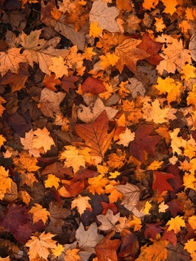 fall foliage autumn leaves