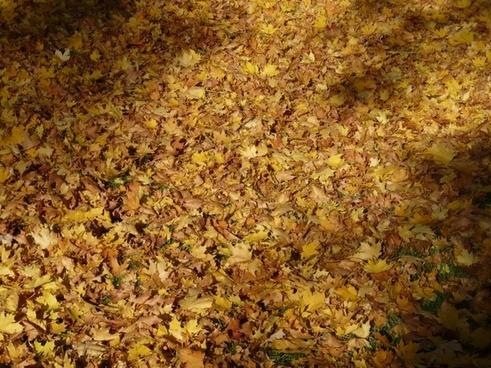 fall foliage fallen covered