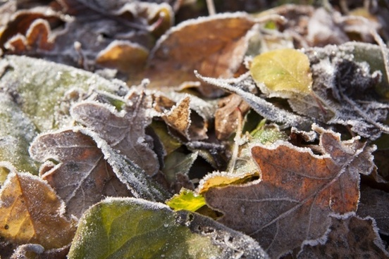 fall foliage hoarfrost precipitate