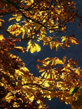 fall leaves gold autumn colours