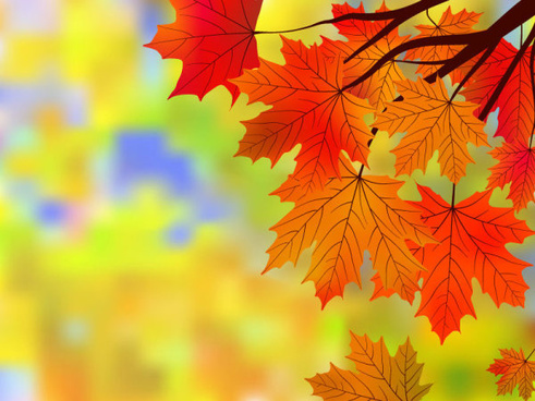 fall of maple leaf elements background vector