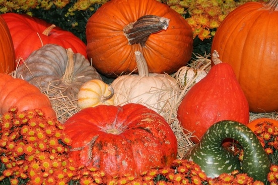 fall pumpkin orange