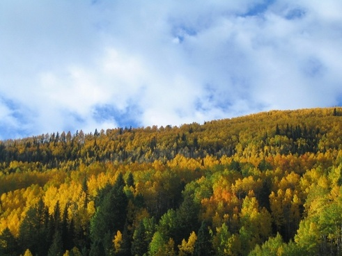 fall trees fall colors