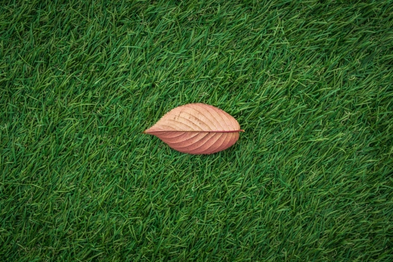 fallautmn leaf in grass