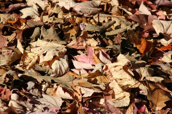 fallen leaves autumn forest floor