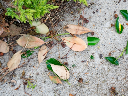 fallen leaves on concrete