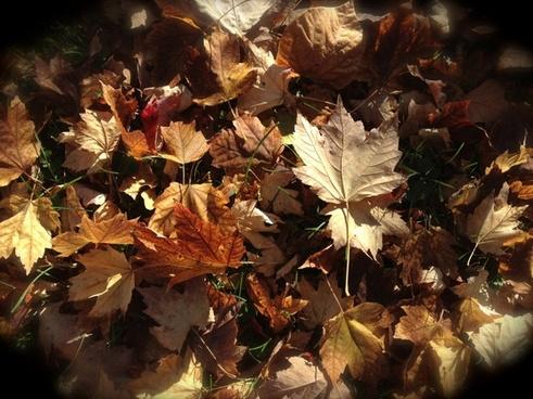 fallen leaves still life