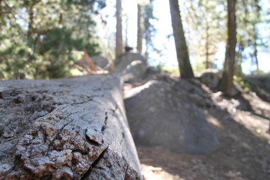fallen log in forest