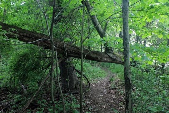 fallen tree gate at eerie bluffs state park ohio