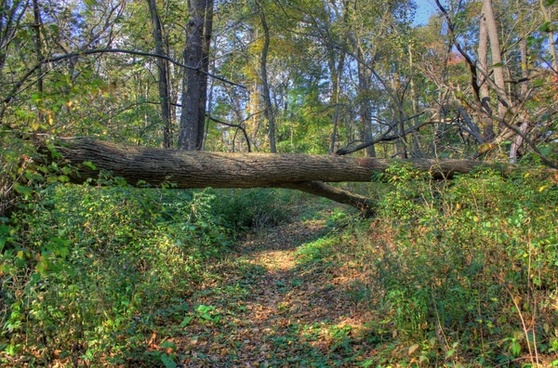 fallen tree on the trail at belmont mounds state park wisconsin