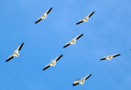 family flight formation