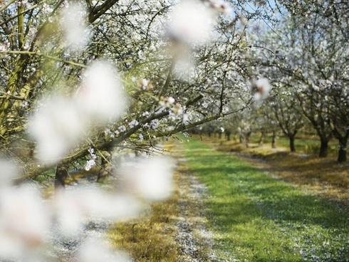 farm flower orchard plant