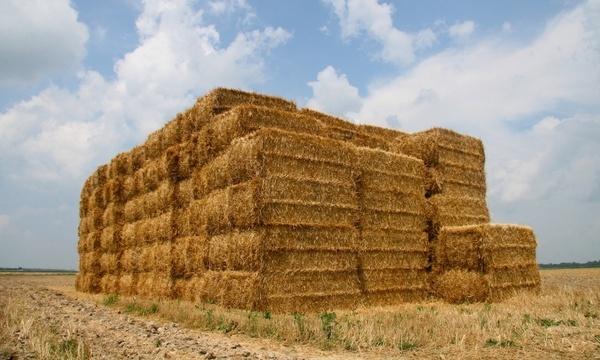 farm rural rustic