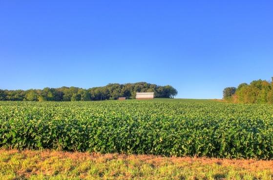 farmhouse over yonder at charles mound illinois