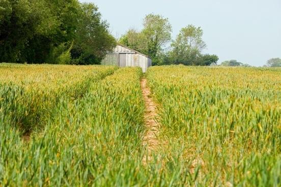 farmland view countryside