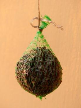 fat balls food bird seed