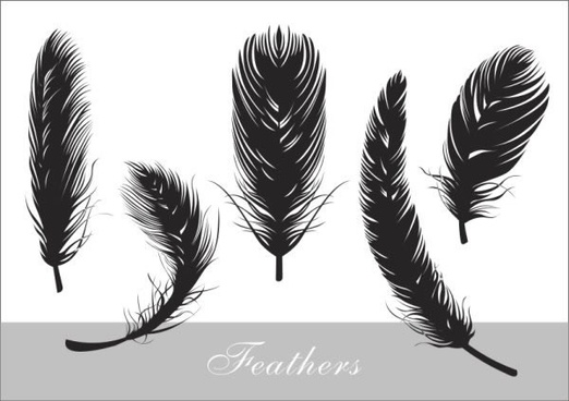 feather icons black white sketch