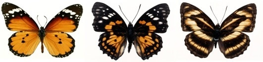 featured butterfly hd 110