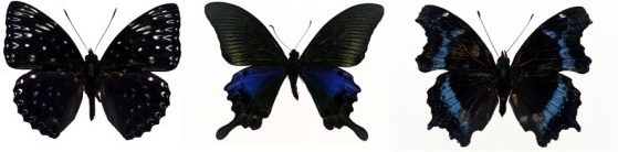 featured butterfly hd 210