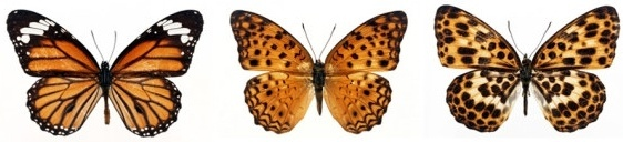 featured butterfly hd 310