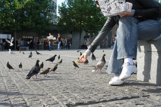 feeding birds pigeons french fries