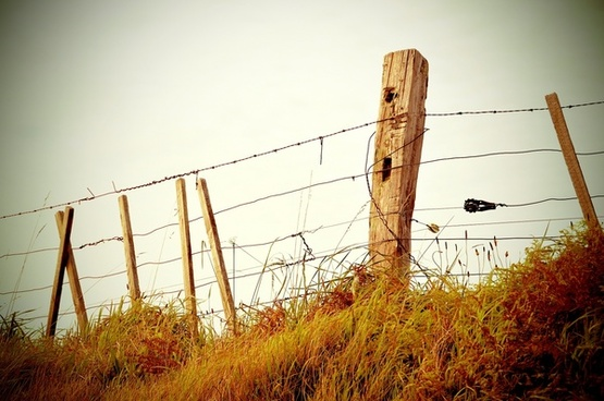 fence grass post wire wood