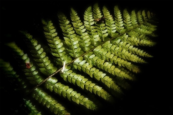 fern plant forest