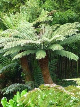 fern tree fern plant