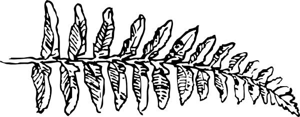 Fernbranch clip art