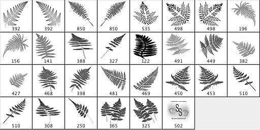 Ferns Brushes