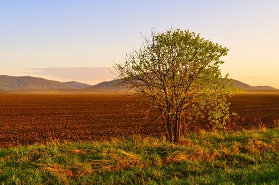 field and tree at sunset