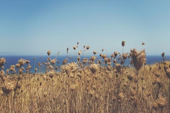 field flower grass horizon ocean plant sea sky