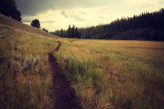 field forest grass hill landscape nature path rural