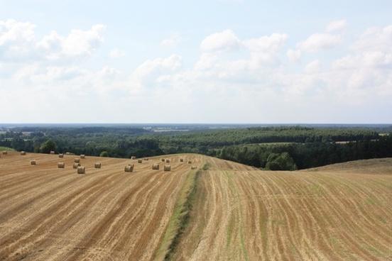 field landscape cereals