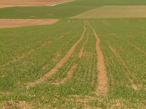 field meadow arable