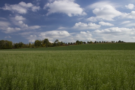 field nature tree line