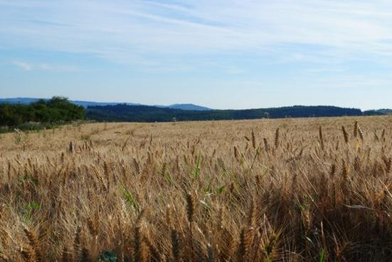 field sky nature